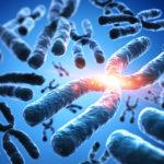 制御された精子DNA損傷の卵母細胞DNA修復能力は女性の年齢によって影響される